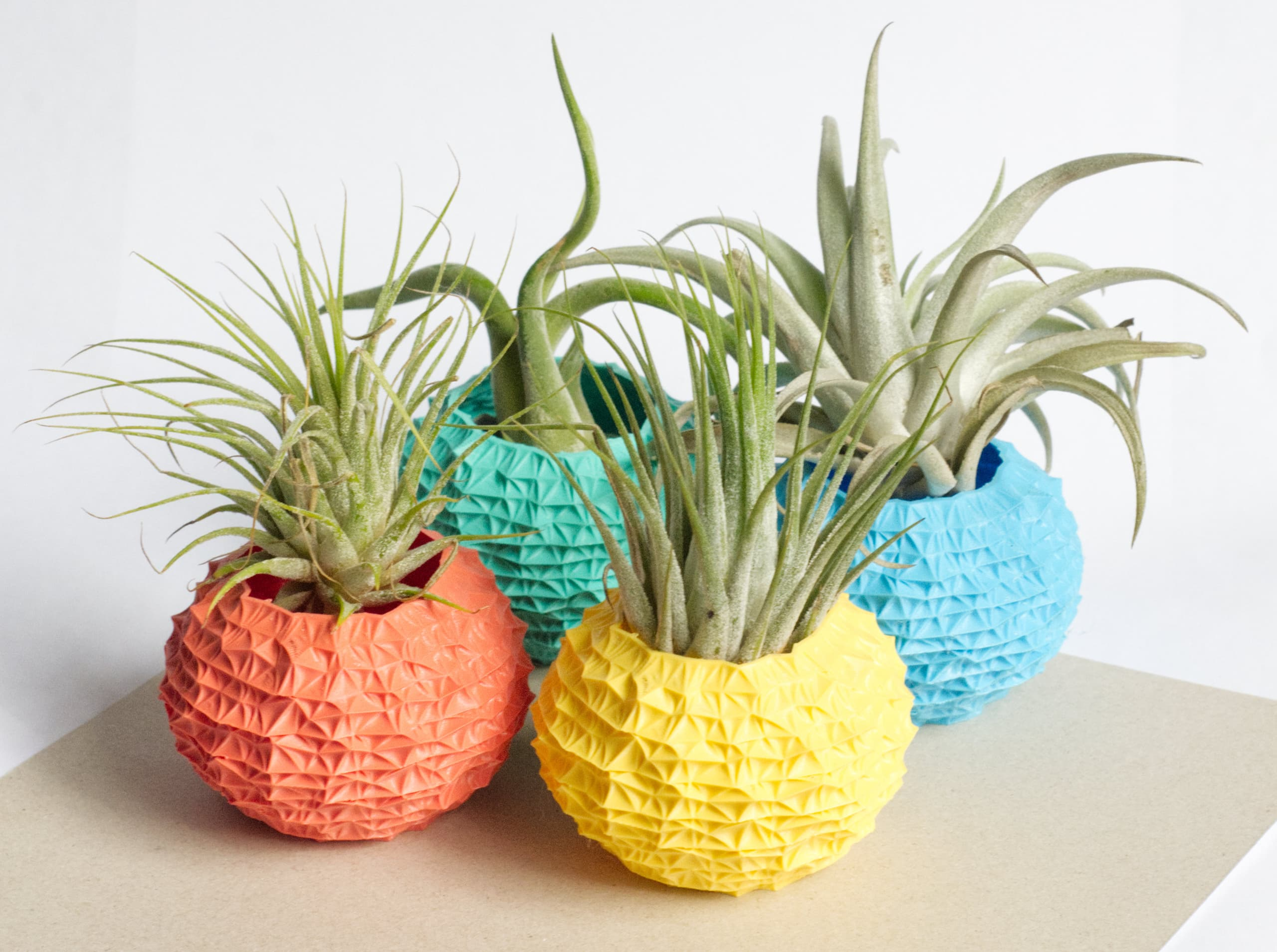 Four spiky, urchin-shaped plastic holders with air plants in various colors.