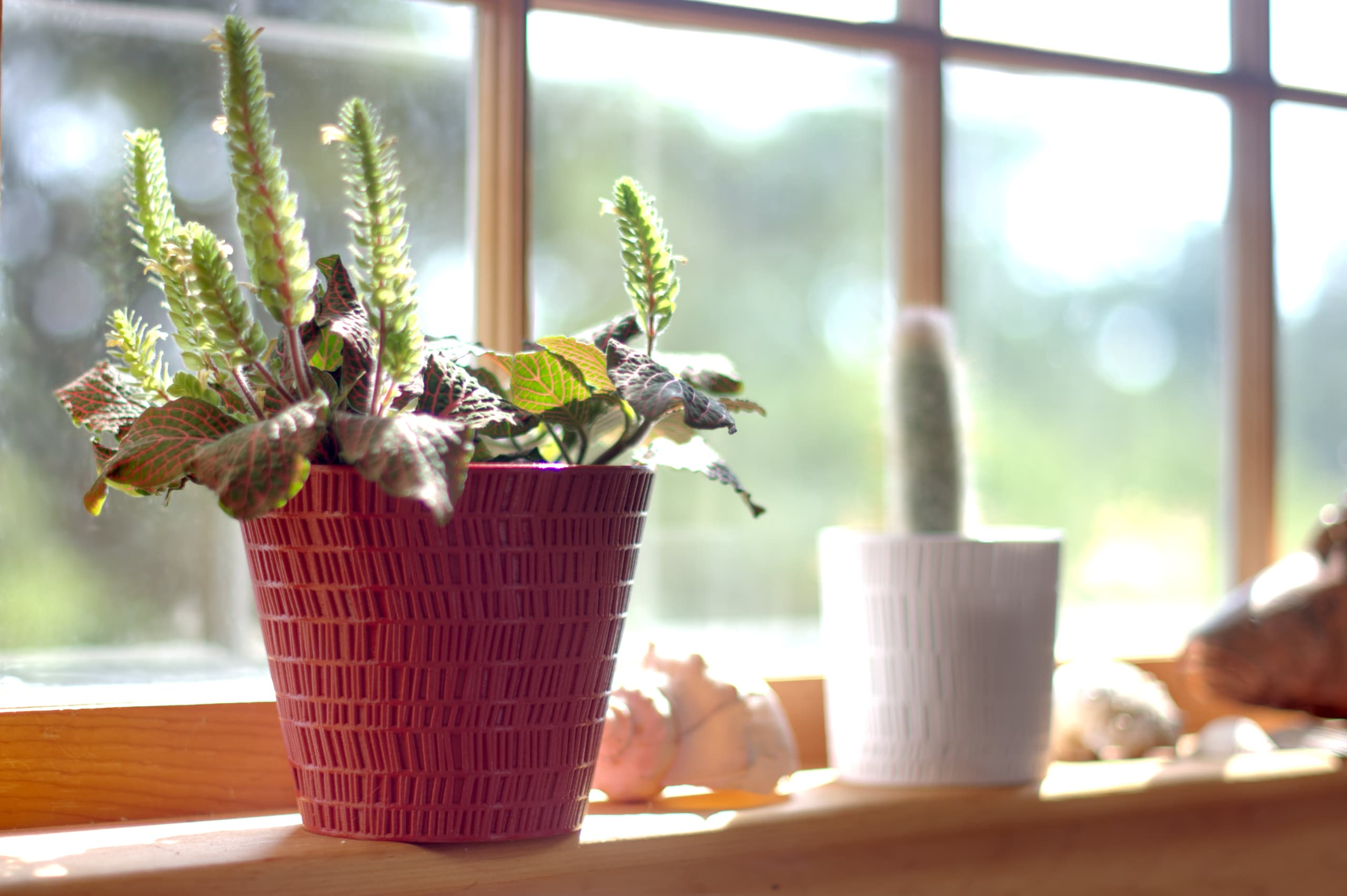 Red pot with a mosaic-like texture and tapered sides, holding a plant on a windowsill next to a smaller planter with a similar texture and straight sides, holding a cactus.